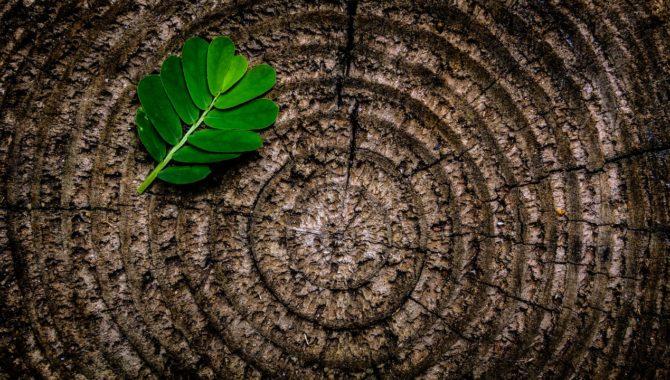 Het veilig kappen van een boom